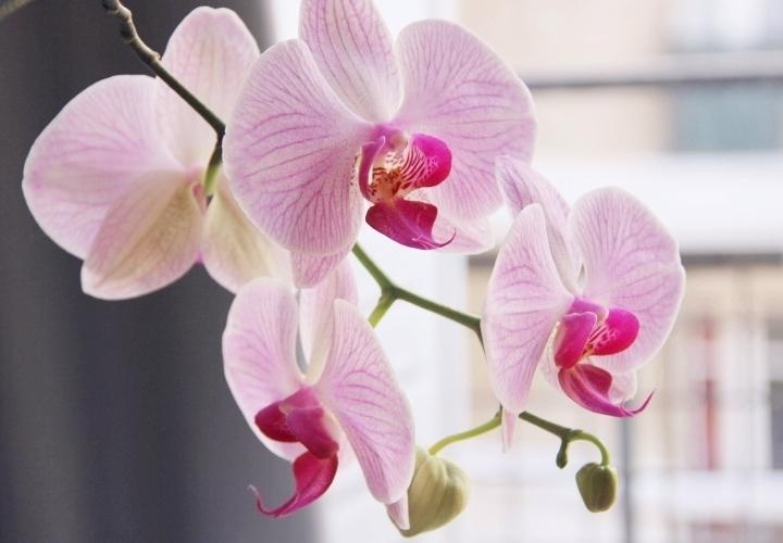 la-souris-coquette-blog-mode-pretty-little-things-orchidee