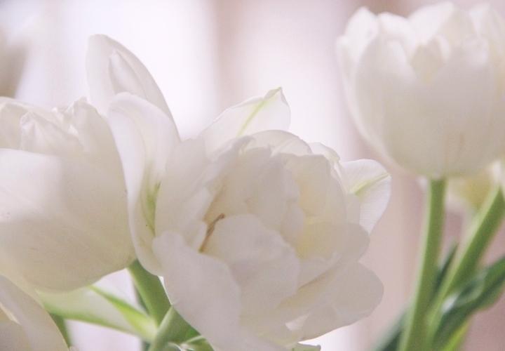 la-souris-coquette-blog-mode-pretty-little-things-tulipes-2