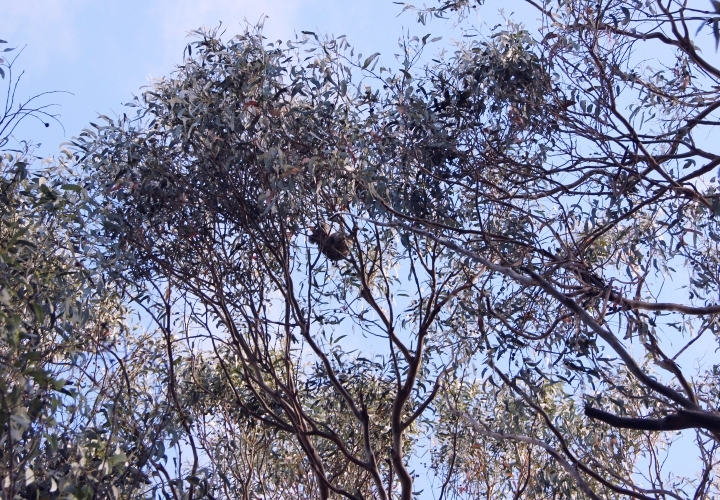 la-souris-coquette-blog-mode-voyages-australie-kangaroo-island-121
