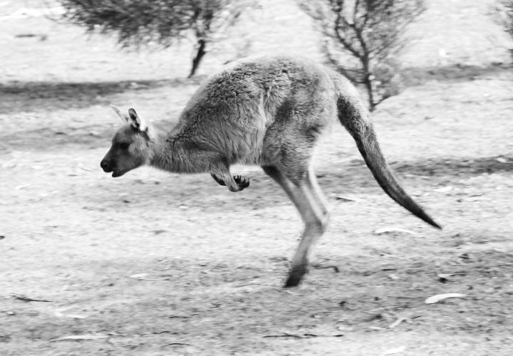 la-souris-coquette-blog-mode-voyages-australie-kangaroo-island-151
