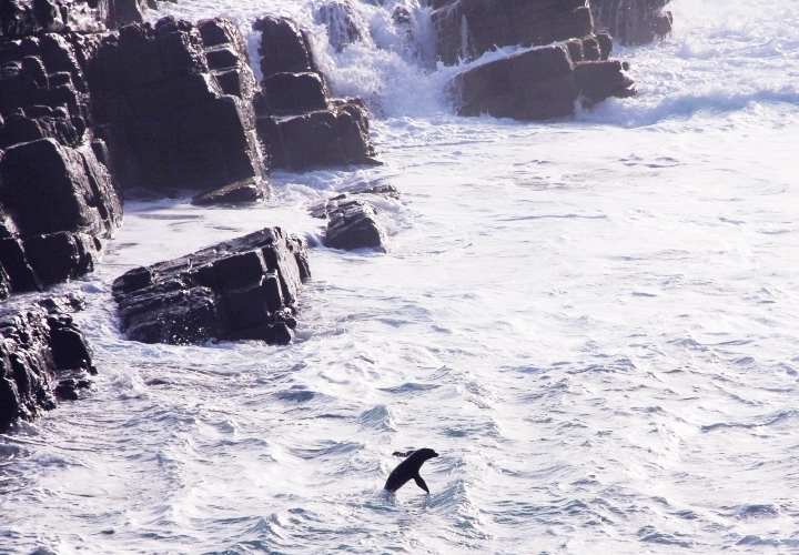 la-souris-coquette-blog-mode-voyages-australie-kangaroo-island-211