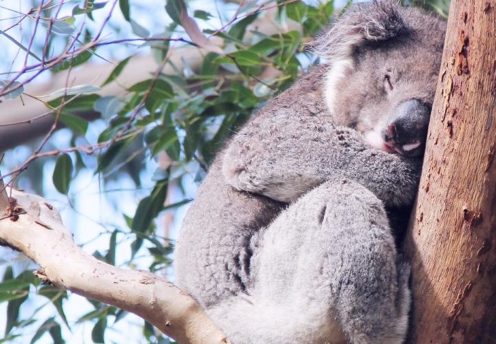 la-souris-coquette-blog-mode-voyages-australie-kangaroo-island-26