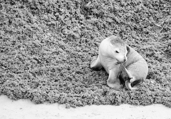 la-souris-coquette-blog-mode-voyages-australie-kangaroo-island-41