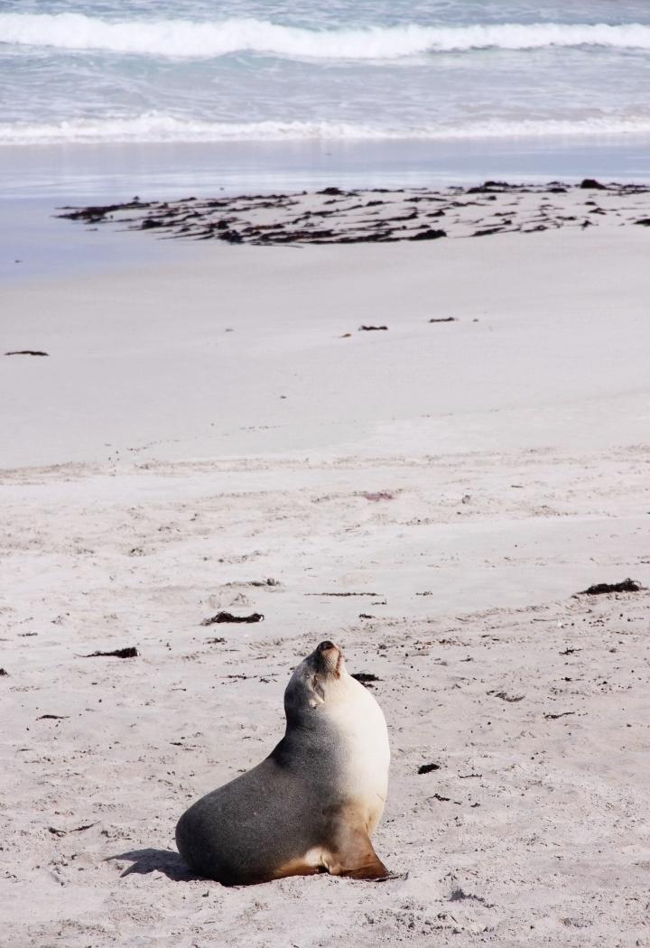 la-souris-coquette-blog-mode-voyages-australie-kangaroo-island-71