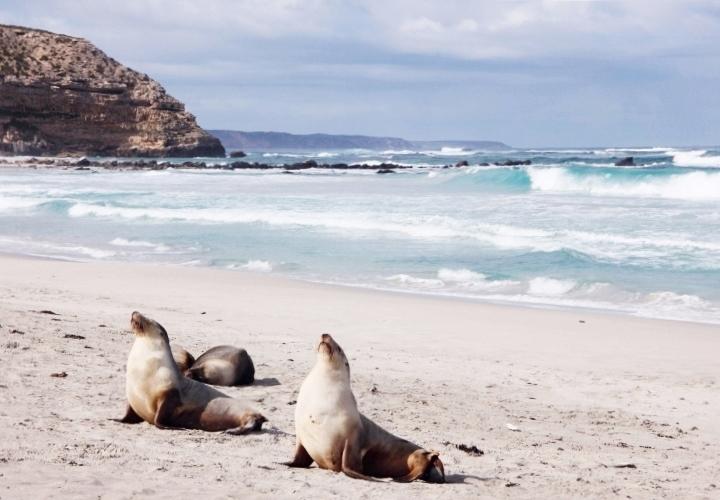 la-souris-coquette-blog-mode-voyages-australie-kangaroo-island-82