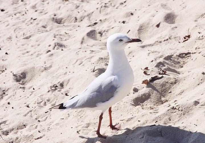 la souris coquette brighton beach 3