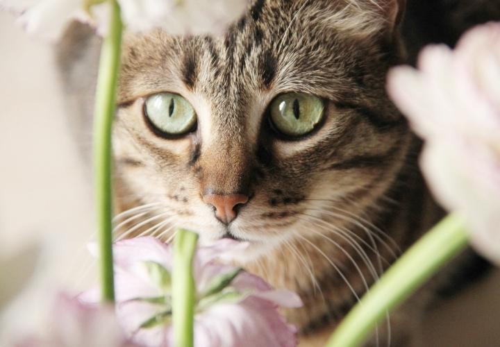la-souris-coquette-blog-mode-décoration-fleurs-renoncules-10