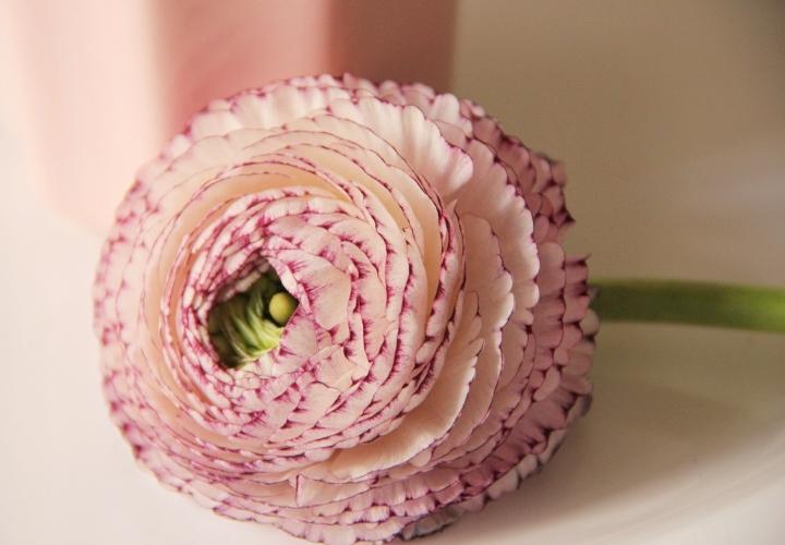 la-souris-coquette-blog-mode-décoration-fleurs-renoncules-5