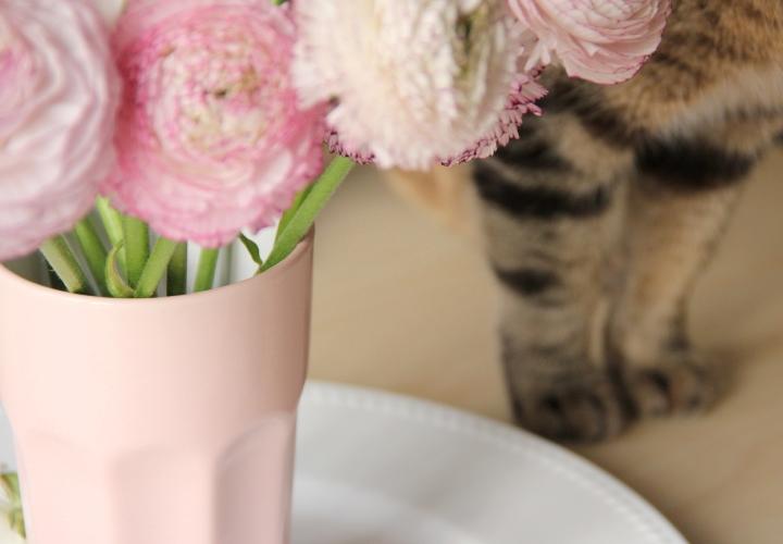la-souris-coquette-blog-mode-décoration-fleurs-renoncules-9