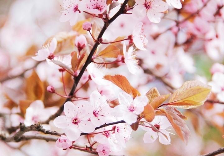 la-souris-coquette-spring-pink-flowers-blossom-pinkblossom-41