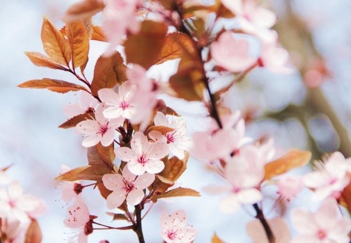 la-souris-coquette-spring-pink-flowers-blossom-pinkblossom-5-Copy