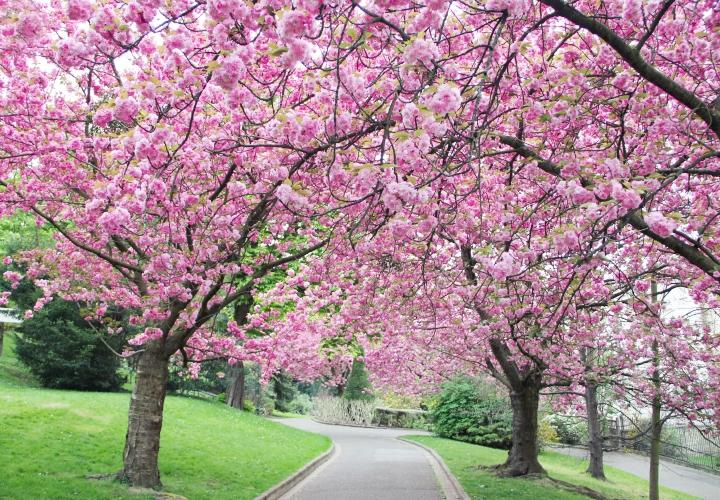 la-souris-coquette-blog-mode-cerisiers-cherry-blossom-12