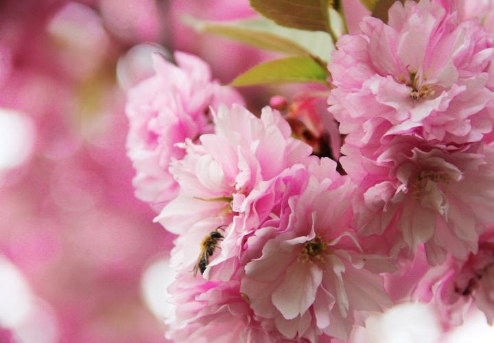 la-souris-coquette-blog-mode-cerisiers-cherry-blossom-16