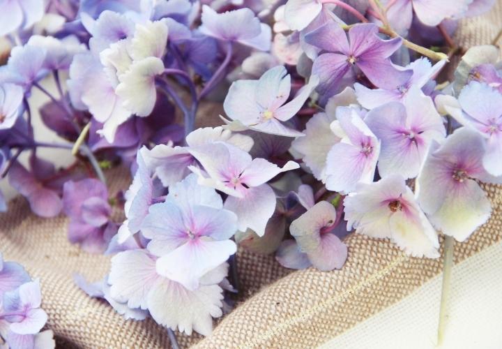 la-souris-coquette-blog-mode-DIY-couronne-de-fleurs-hortensia-9
