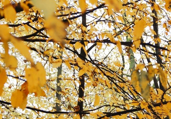la souris coquette 10 raisons d'aimer l'automne 15