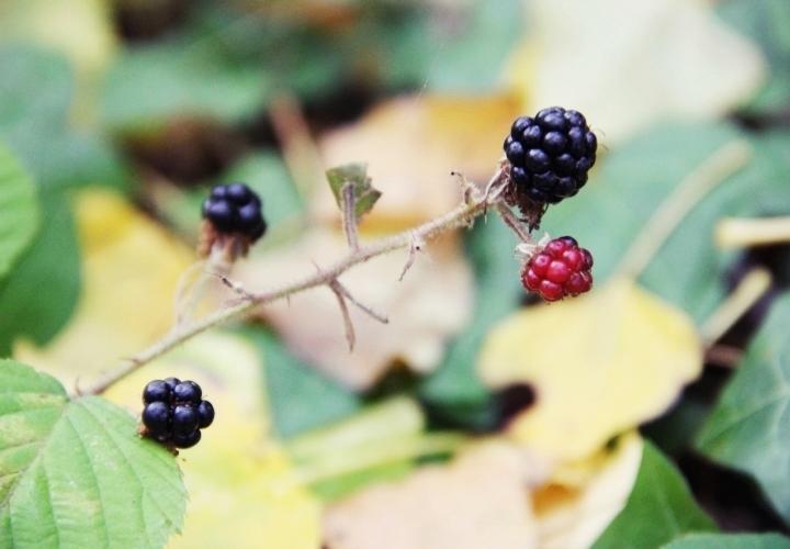 la souris coquette 10 raisons d'aimer l'automne 8