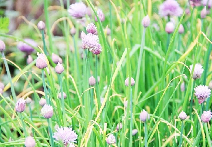 la-souris-coquette-blog-mode-disney-disneyland-environnement-12