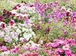 la-souris-coquette-blog-mode-disney-disneyland-environnement-23