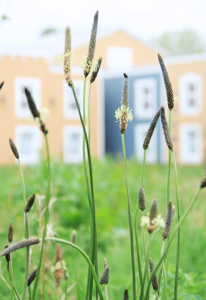 la-souris-coquette-blog-mode-disney-disneyland-environnement-5