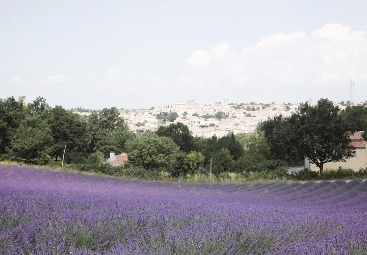blog-voyage-mode-champs-lavande-france-plateau-valensole-1a-12