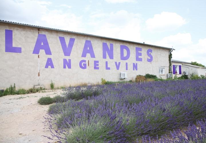 blog-voyage-mode-champs-lavande-france-plateau-valensole-1a (5)