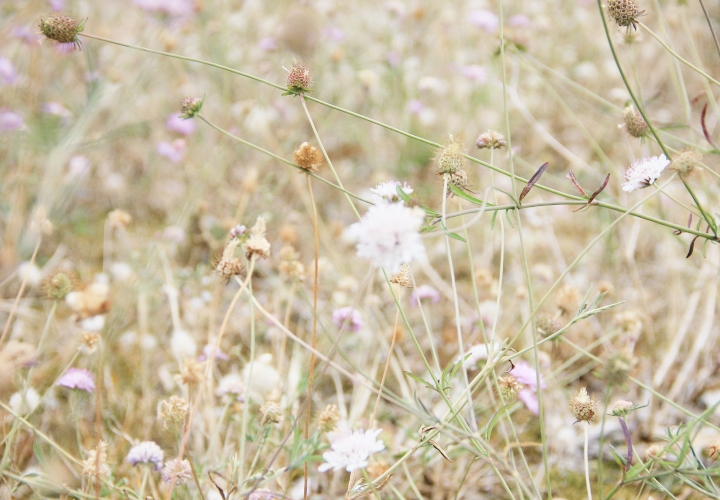blog-carnet-voyage-bretagne-groix-etel-quiberon-28-2