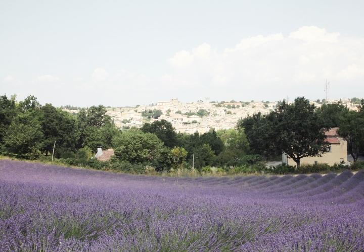 blog-voyage-mode-sud-gorges-verdon-champs-lavandes-plateau-valensole-17