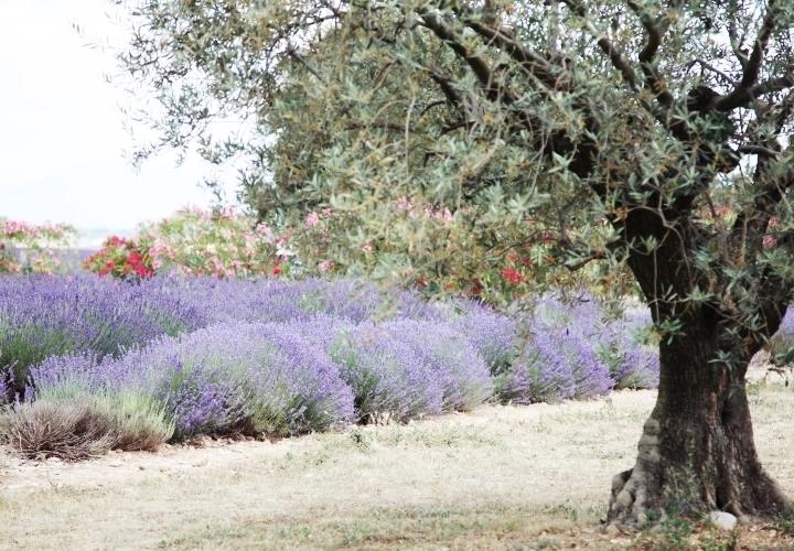 blog-voyage-mode-sud-gorges-verdon-champs-lavandes-plateau-valensole-7