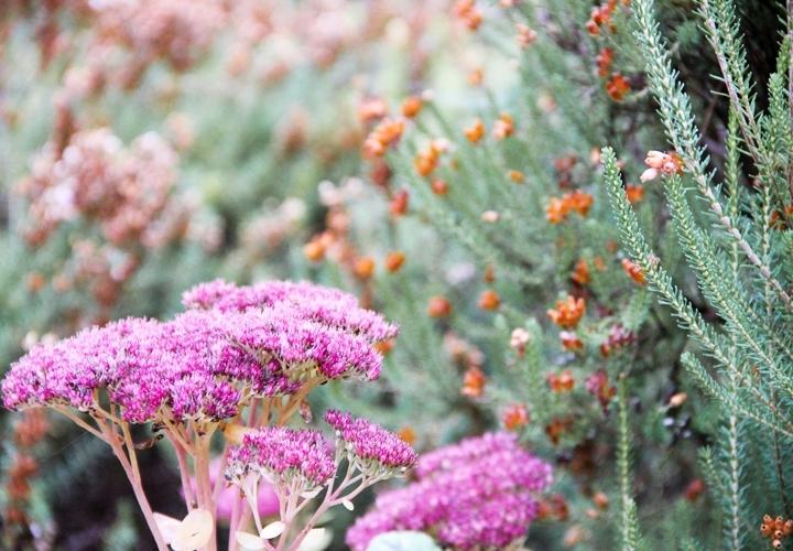 blog-mode-automne-arboretum-grandes-bruyeres-1