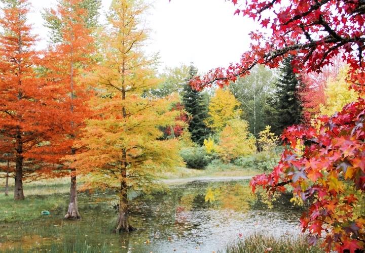 blog-mode-automne-arboretum-grandes-bruyeres-16