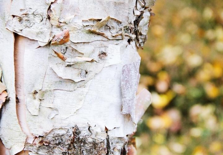 blog-mode-automne-arboretum-grandes-bruyeres-17