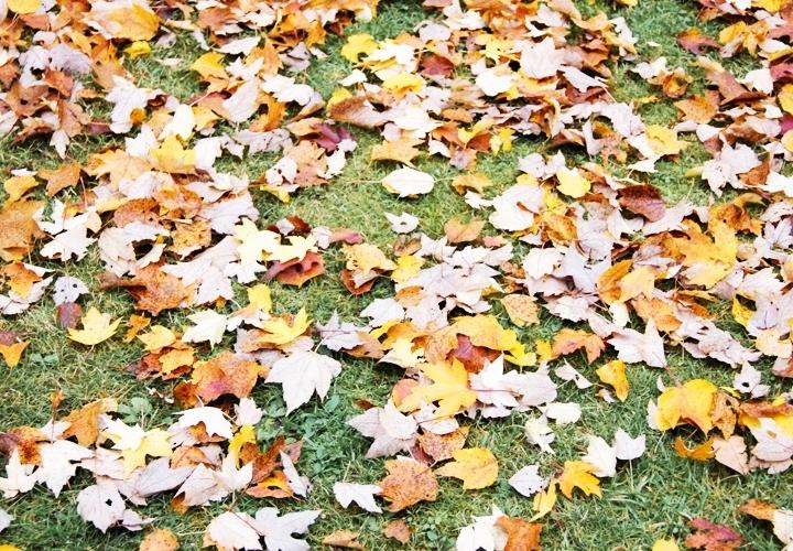blog-mode-automne-arboretum-grandes-bruyeres-18