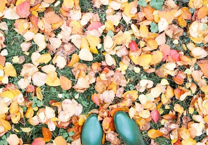 blog-mode-automne-arboretum-grandes-bruyeres-2