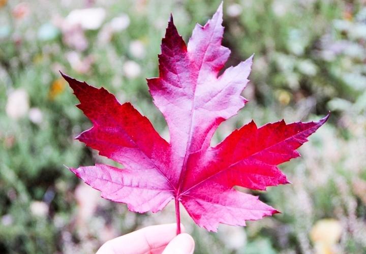 blog-mode-automne-arboretum-grandes-bruyeres-20