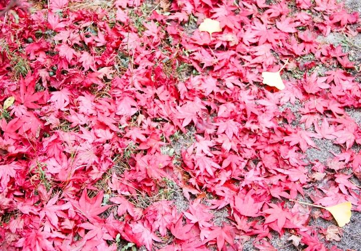 blog-mode-automne-arboretum-grandes-bruyeres-4