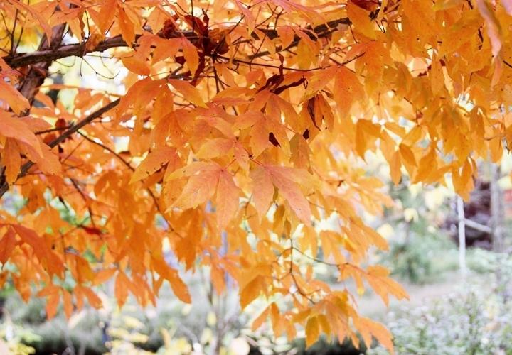 blog-mode-automne-arboretum-grandes-bruyeres-6