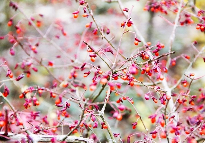 blog-mode-automne-arboretum-grandes-bruyeres-7