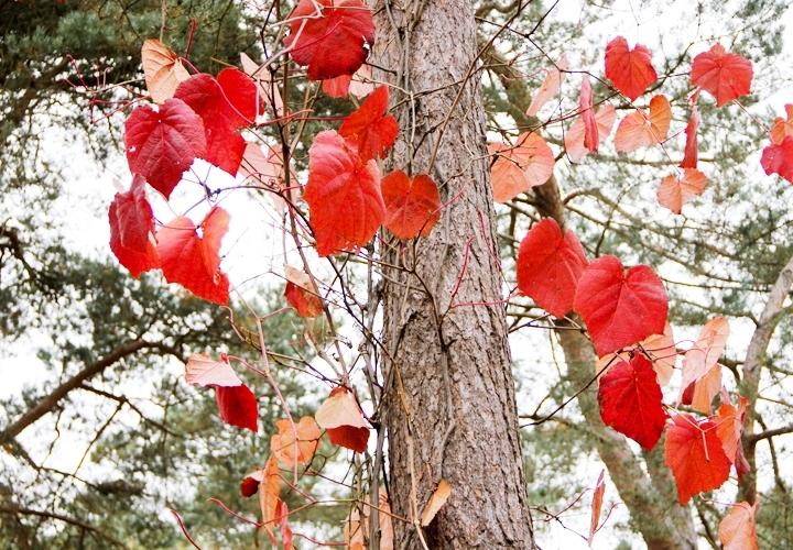 blog-mode-automne-arboretum-grandes-bruyeres-8