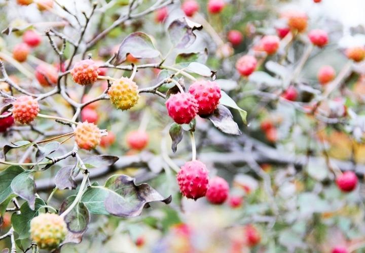 blog-mode-automne-arboretum-grandes-bruyeres-9